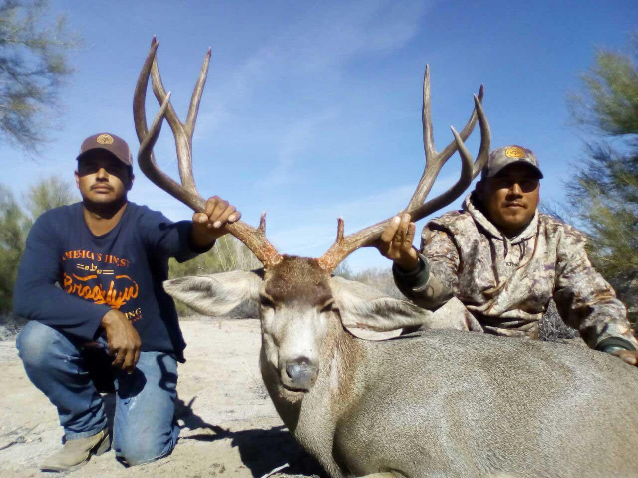 Sonora Mule Deer