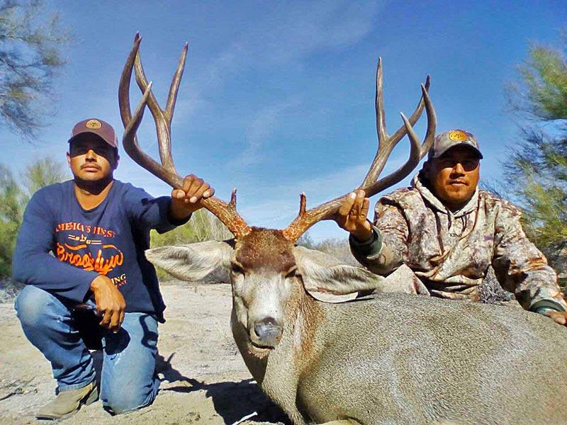 Giant sonoran mule deer